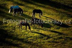 Jeden z našich fotografů na www.fotografi-fotoobrazy.cz Marek Suchý nabízí tuhle fotku.