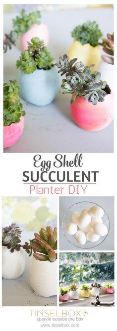 Egg Shell Succulents | DIY