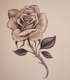 Early early morning rose inkdmonkey com losangeles westcoast mycrazylife rose southbay rosesketch pencil sketch chango… Rose Drawing Tattoo, Tattoo Sketches, Tattoo Drawings, Art Sketches, Drawing Of A Rose, Sketch Drawing, Drawing Art, Pencil Drawings Of Flowers, Flower Sketches