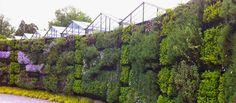 Le mur végétal a fait son apparition dans nos intérieurs. Aujourd'hui objet d'art, à la fois esthétique, pratique, il permet d'introduire de la verdure dans la maison, sur nos terrasses ou nos balcons. Mais connaissez-vous l'origine de cette création ? Le Blog de Jardinage vous propose un Ou reviens Acre flagyl mode d'emploi réserver Il … Objet D'art, Store Design, Hui, Vineyard, Sweet Home, Gardening, Blog, Outdoor, Gardens