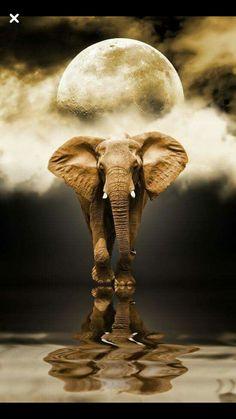 Dinâmicos, fortes...assim são estes animais...!