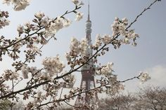 This is in Tokyo, Japan. Lived several years, as a youngster, in Sakai, Japan  Beautiful beautiful country.