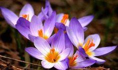 Florés queridas