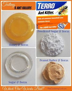 I recently test four DIY Borax and killers as well as the retail product Terro  Find out which one worked best for me - thegardeningcook.com