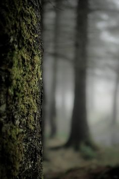 Mystic Forest by Alex Pieussergues ׆ōנ on Background Images For Editing, Photo Background Images, Blurred Background, Photo Backgrounds, Hd Background Download, Picsart Background, Tree Forest, Dark Forest, Misty Forest