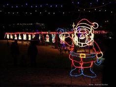Lions' Festival of Lights