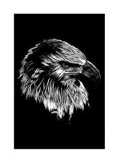 Eagle | Linocut