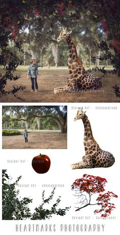 I Will Follow by HeartMarks Photography | Tutorial with Tara Lesher Photography | #imaginewithhmp | Photoshop | Composite | Giraffe