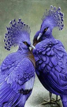 Your Highness, I love the colour of your feathers! - Trena Sim - Google+