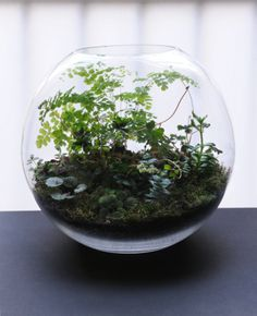 when we move i'm going to fill our new home with terrariums!