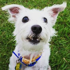 Daisy at the dog park