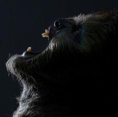 Shapeshifter Wolf #werewolf #shapeshifter #werewolves #fantasy #art