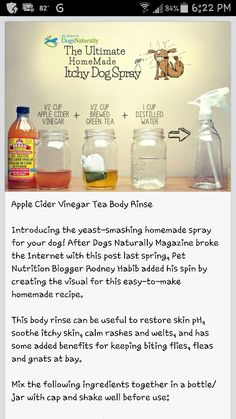 Homemade Itching Spray for your dog.