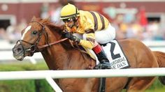 Wise Dan and Groupie Doll racing on the same day....a great day!