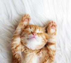 KITTEN CUTE Cute Kittens, Kittens Cutest Baby, Cute Kitten Gif, Funny Cat Videos, Funny Cats, Baby Kitten Videos, Cat Fails, Video Chat, Cute Pomeranian