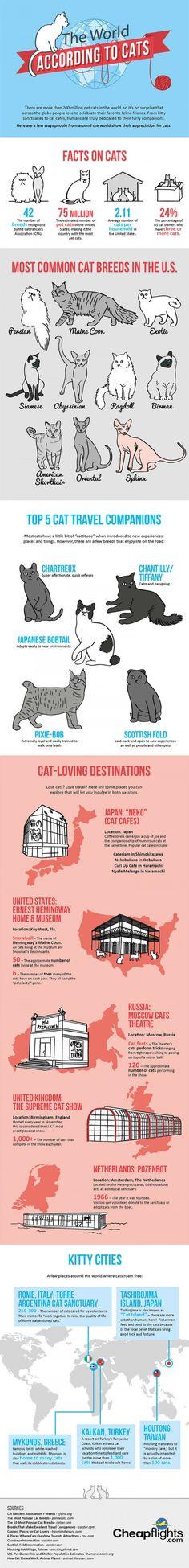 Weird Facts about Cats  #Weird_Facts_about_Cats
