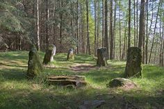 Image of Scottish Ancient Glassel Deeside Stone Circle Forest Trees Monoliths Enclosed or stone setting lies near the Canny | Jim Henderson