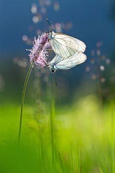 L'amour est dans le pré... Love is in the meadow