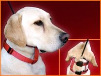 Choosing the Right Leash and Collar