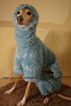I think you should get this for your doggie! Made me smile!