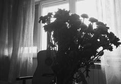 Flori topite de ploaie joc de umbre și...o chitara care tace spre toamna #instagramers #instagood #interiordesign #inside #shadow #black # monochrome #flowers #quitar #windows #light #minimalist #photography #photo #home