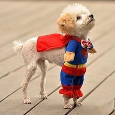 Up, up, and away! Puppy costumes are the cutest things on earth!!! #dogs #dog #puppy #pup #cute #superhero #instagood #dogs_of_instagram #pet #pets #superman #animals #petstagram #petsagram #dogsitting #photooftheday #dogsofinstagram #ilovemydog #instagramdogs #puppies #dogstagram #dogoftheday #lovedogs #lovepuppies #hound #puppiesofinstagram #doglover #instapuppy #instadog