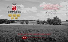 Cognac Scenery and Landscape, Vineyards. Black and White Photography.