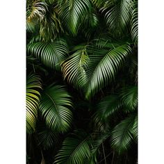 Scenic Backdrops Trees Parks Woodland Backdrops Leaves Backgrounds G-627 - 6.5'W*6.5'H(2*2m)