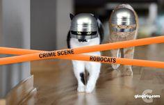 http://www.glogirly.com/2014/11/neatobestpetvacuum-and-robocats.html#.VFjlBMkhMt4