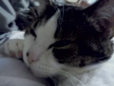 My Baby Kitty   the animal rescue site   Read heartfelt stories of rescue, and share your rescued animal stories with others. Click to read and share Baby's rescue story. #AdoptDontShop