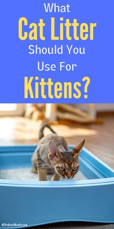 Discover everything you need to know about cat litter for kittens. Including when it's the right age for your little fur baby to use a box. Plus, the best litter for kittens, and the type you should NEVER use. Tiny Kitten, Little Kittens, Cats And Kittens, Litter Box, Best Litter For Kittens, Different Types Of Cats, What Cat