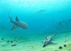 Sphenodus longidens attacking Callorhinchus sp. and Notidanoides muensteri at the bottom