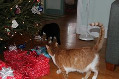 The cats were stirring! 365 Photo, Visual Diary, First Photograph, Project 365, Cats, Projects, Photography, Log Projects, Gatos