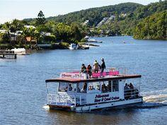 Noosa River and Everglades Afternoon Tea Cruise - Tourism Sunshine Coast Sunshine Coast, Australia Travel, Afternoon Tea, Habitats, Tourism, Cruise, Scenery, Wildlife, Boat