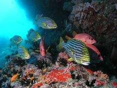 $ 413/Night #Royal Island #Resort & #Spa #Beach #Resort. #Horubadhoo Island in #Baa #Atoll, #Maldives. http://VIPsAccess.com/luxury-hotels-maldives.html