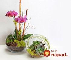 Odkedy som dala orchideu do skla, kvitne nepretržite už celé mesiace: Inak už nepestujem - najkrajšia dekoráciu, akú doma môžete mať!