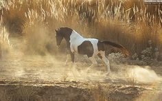 MARWARI HORSES OF INDIA II Equine photography by Ekaterina Druz