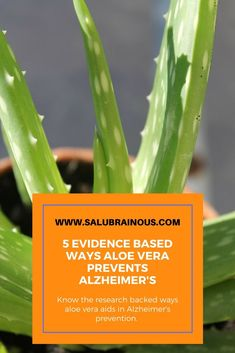 Explore the science backed ways by which aloe vera can prevent Alzheimer's and protect brain health. Brain Nutrition, Brain Health, Health And Nutrition, Mental Health, Herbal Remedies, Health Remedies, Natural Remedies, Brain Supplements, Natural Supplements