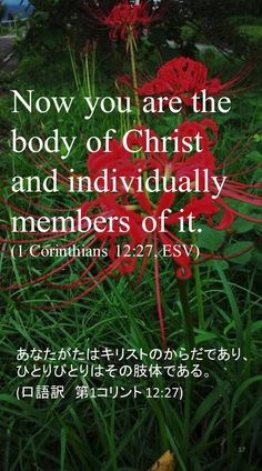 Now you are the body of Christ and individually members of it.(1 Corinthians 12:27, ESV)あなたがたはキリストのからだであり、ひとりびとりはその肢体である。 (口語訳 第1コリント 12:27)