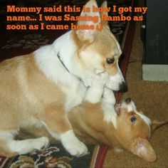 Mommy said this is how I got my name... I was Sassing Rambo as soon as I came home :)