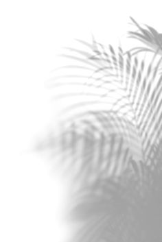 Shadow of palm leaves on off white background   premium image by rawpixel.com / Jira White Background Wallpaper, All White Background, Cute Wallpaper Backgrounds, Cute Wallpapers, White Background Photography, New Background Images, Shadow Images, Shadow Pictures, Shadow Shadow
