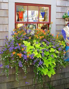 Wonderful New England window box