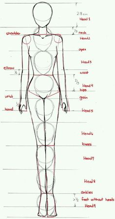 body proportions. ashion illusyartions comprise of 9 heads