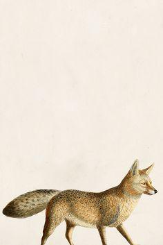 Fox on the move artwork Fuchs Tattoo, Fantastic Fox, Illustration Art, Illustrations, Fox Art, Art Graphique, Woodland Creatures, Art Plastique, Oeuvre D'art