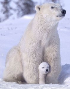 Mother and her cub