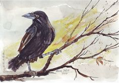 'Crow on a bough' - W&N watercolour on Bockingford 300gsm Coco, my Black Crow, whom I was lucky to have in my life for 20 years (Tarlton, Gauteng, South Africa). http://www.redbubble.com/people/mareeclarkson/works/7749136-crow-on-a-bough?asc=u