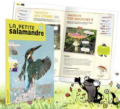 Abonnement à La Petite Salamandre, 1 an>La Salamandre