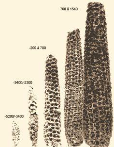 -4500  AMERIQUE  Début de la culture du maïs dans la vallée de Tehuacán (Mexique actuel)