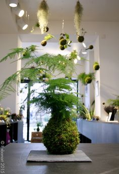 Paris store specialising in IKEBANA ART - must check it out - Picture Asparagus Fern, Ikebana, Indoor Garden, Indoor Plants, Carriage House Apartments, Art Floral Japonais, Apartment Balcony Garden, String Garden, Inside Garden