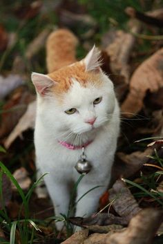 cybergata: Shironeko cybergata: Shironeko The post cybergata: Shironeko appeared first on Katzen. Pretty Cats, Beautiful Cats, Animals Beautiful, Cute Animals, I Love Cats, Cute Cats, Funny Cats, Shiro, Kittens Cutest